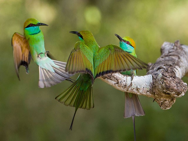birdwatching_wild