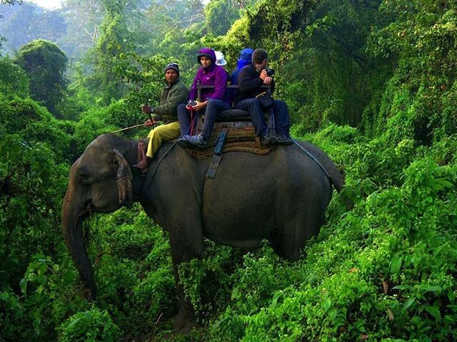 nepal_wildlife